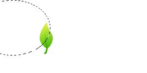 Leaf Logo Photoshop Tutorials